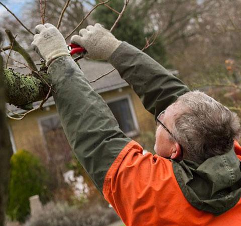 Beskæring af træer og buske